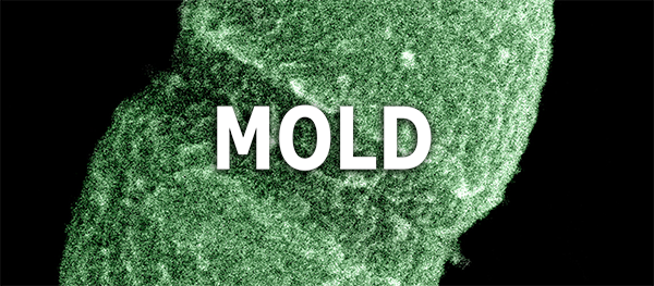 Mold Inspection & Testing Call