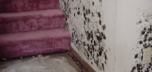 Tips about how to control mold