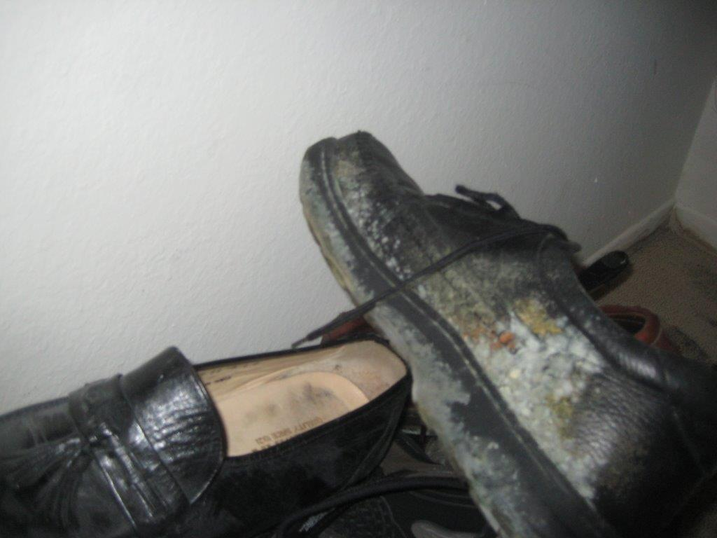 mold growing on my shoes in a home located in valencia ca