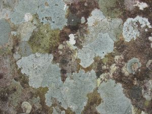 The dangers of mold: what you need to know
