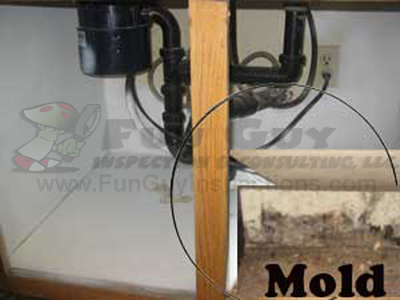 Black-Mold-In-My-Kitchen Look for funguy before you buy