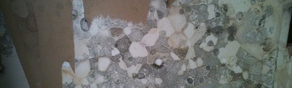 Patterns of Mold Emerging from the Surface of Water Damage Materials