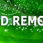 What Happens During Mold Remediation?