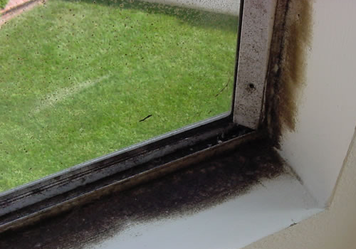 What condition causes black mold growth to a window frame?