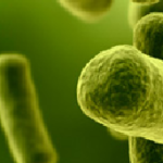 SuperBugs |  5 Different antibiotic Resistant Bacteria Live on Planes