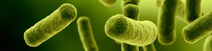 Antibiotic Resistant Bacteria_Study Show how long bacteria can live