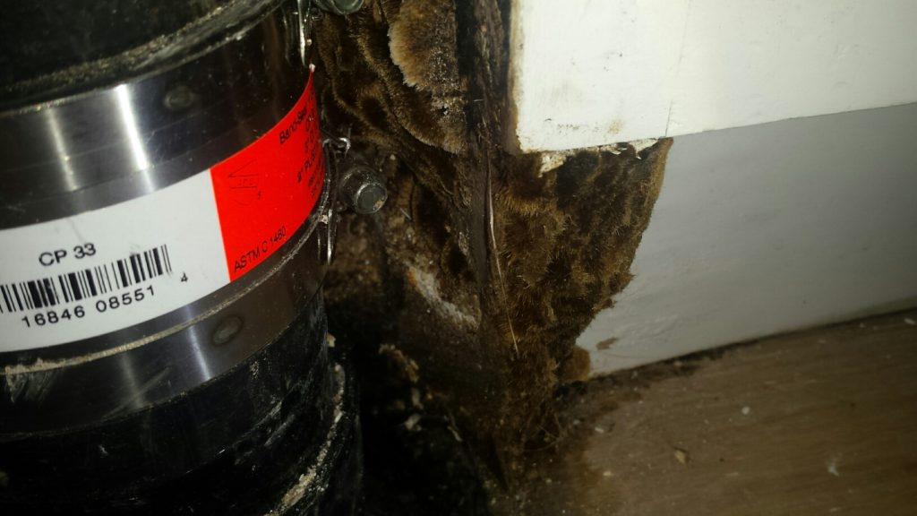 Fungi, FunGuy, Mold Inspections in Reseda CA