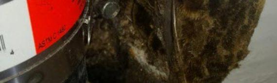 Fungi or FunGuy or Mold?