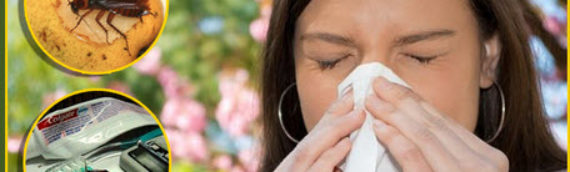Protect Yourself from Allergens, Mildew, and Mold in Your Home