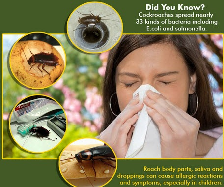 roaches allergies and asthma triggers in your environment