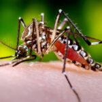 CDC - Puerto Rico Zika Virus Outbreak