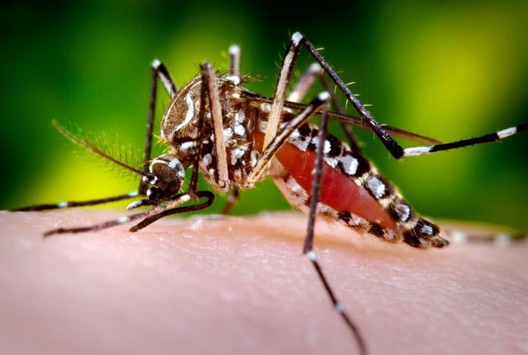 zikaviruscdcusa