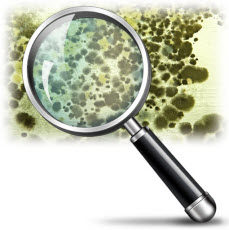 Mold Growth: Keeping your home safe