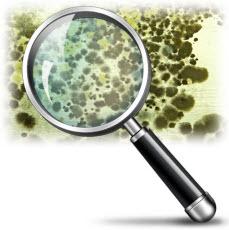 best mold testing companies
