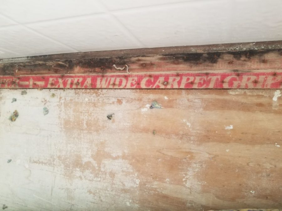 Why mold follows water damage and how to stop it before it spreads during a flood