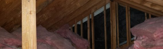Attic Mold: Is it a Big Deal?