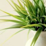 26 Plants That Clean The Air