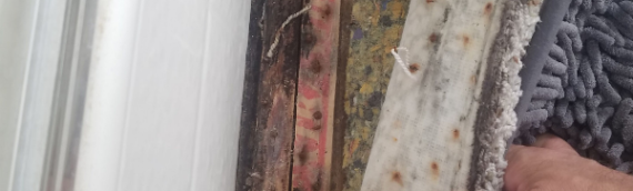 Recent rains cause spike in mold growth