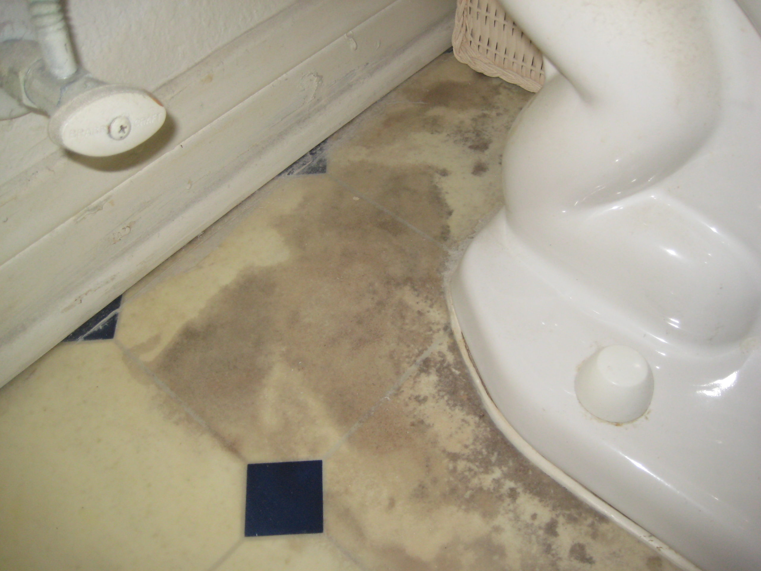 Yuck! Bacteria and mold growth are spreading | Moorpark, CA