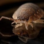 Dust Mites: Problems You Never Know Exists in Every Home