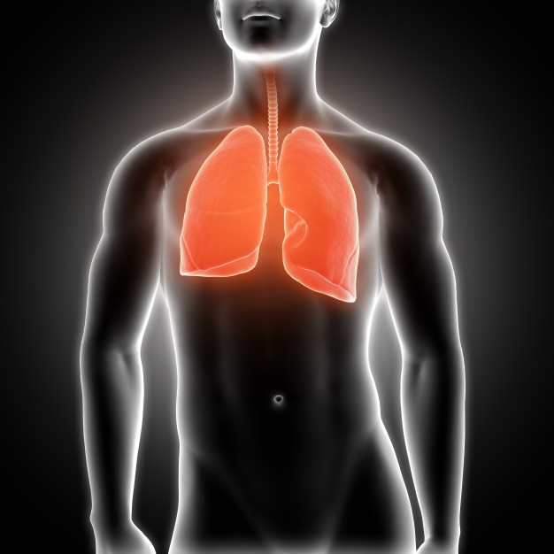 Lungs Free Photo