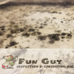 Indoor Mold Detection: A Closer Look