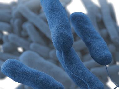 [Microscopic view of Legionella pneumophila]